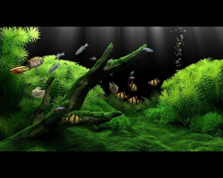 Заставка аквариум с рыбками видео
