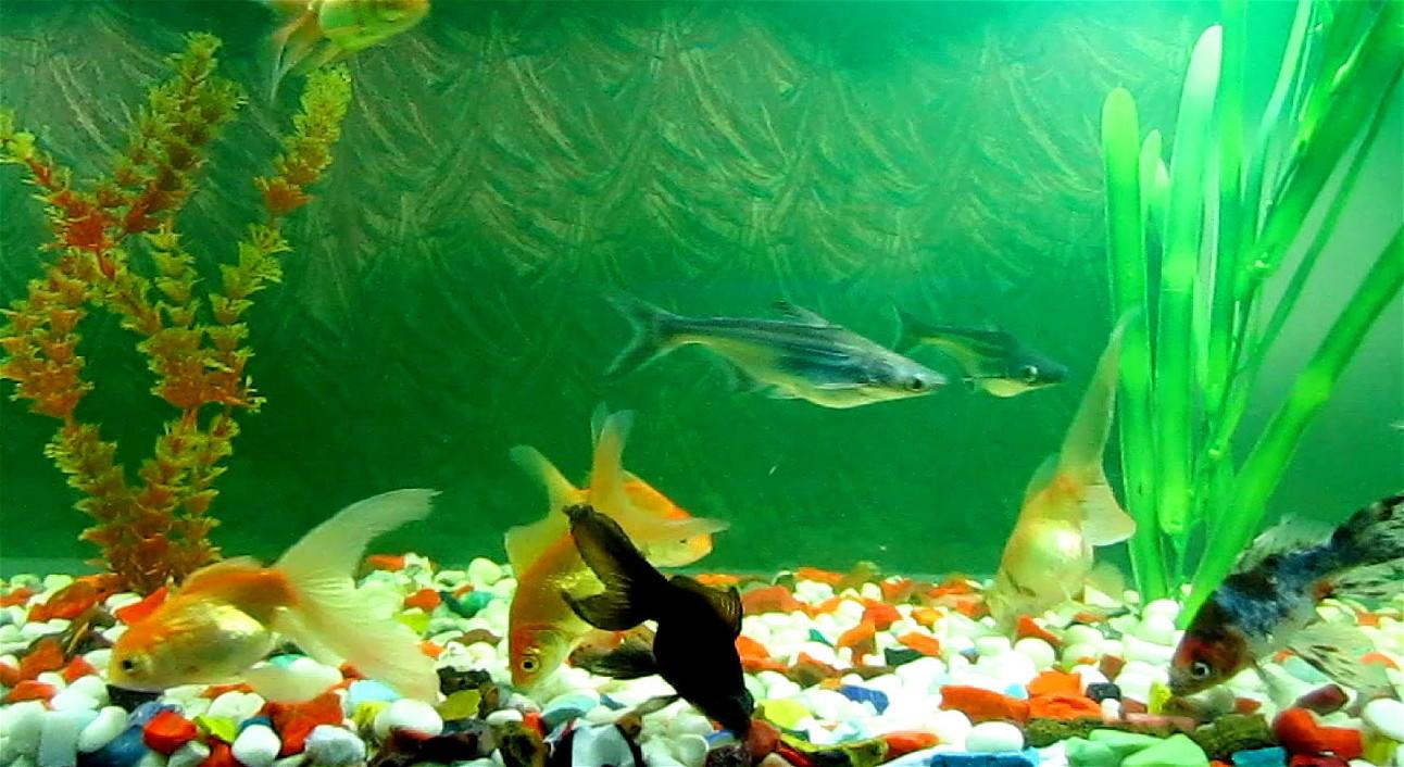 Анимированные обои аквариум яркие