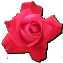 rose-cerise