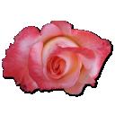 rose-china