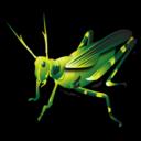 grasshopper_128