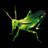grasshopper_48
