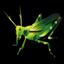 grasshopper_64