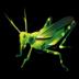 grasshopper_72