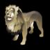 lion_72