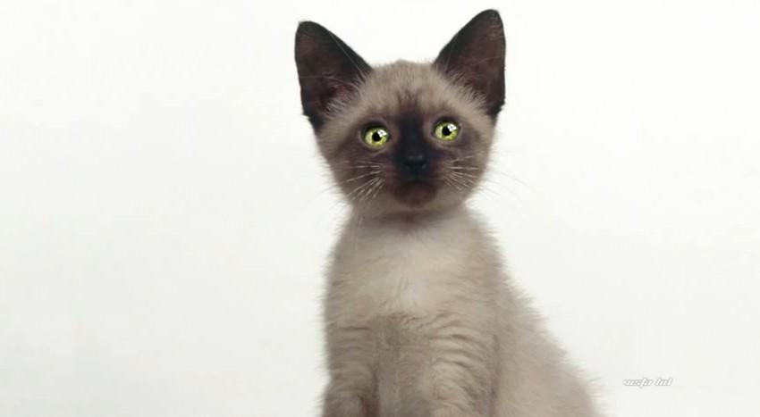 котята анимированные картинки