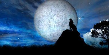 Полуночный волк