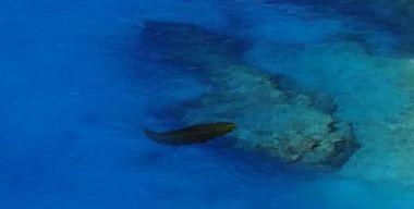 Подводная змея