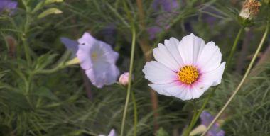 Белая красота