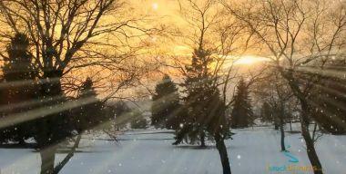 Снегопад в лесу