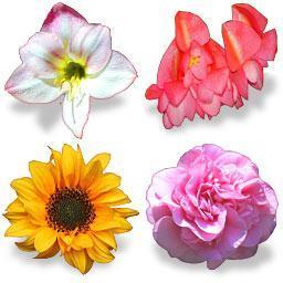 Bouquet_icons