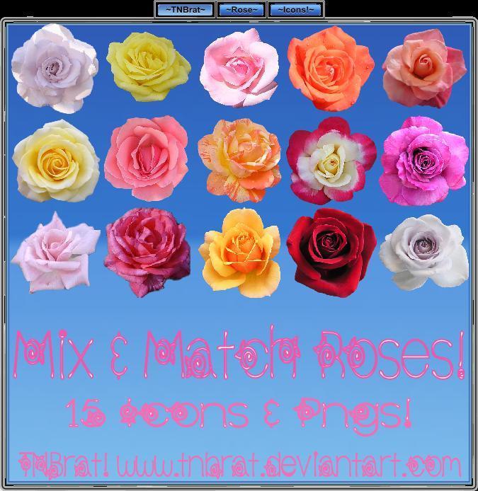 Mix_N_Match_Roses
