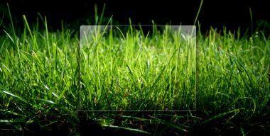 Grass Logon