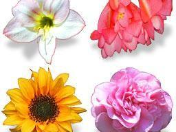 Bouquet_icons