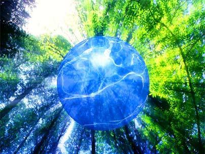 Энергия живого леса