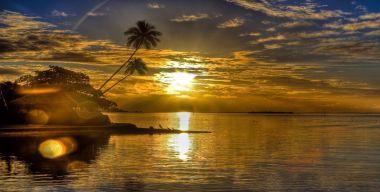 Золотистый закат над пальмами