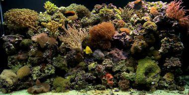 Аквариум – коралловый риф