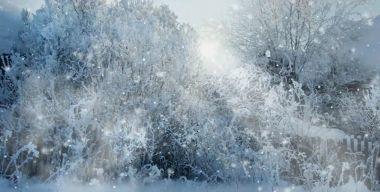Зимнее спокойствие