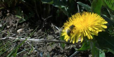 Ненасытные пчелы