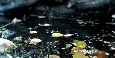 Красивая вода и осень