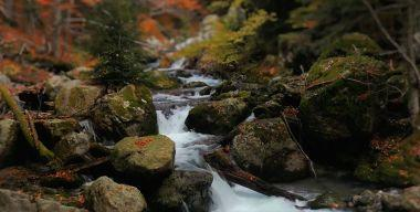 Autumn Forest Waterfall