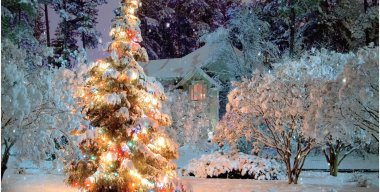 Christmas Tree Snow Live Wallpaper